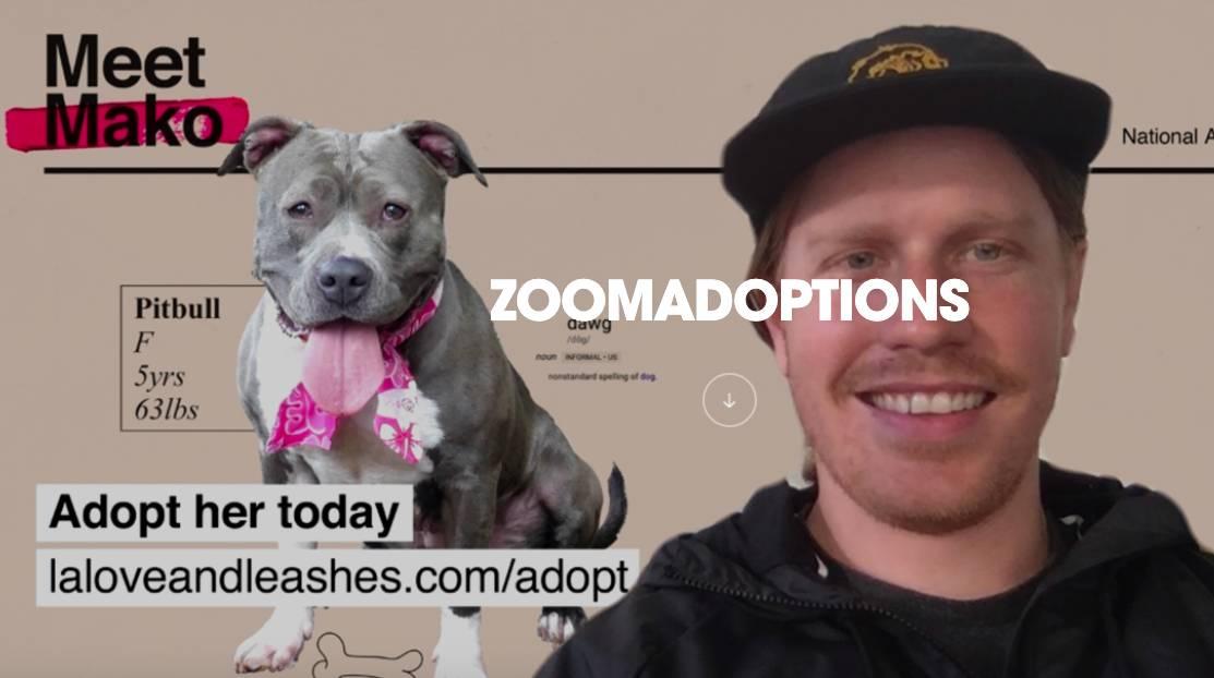 Zoom Adoption Agency initiative